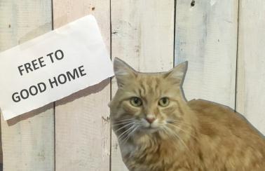Free Pet Cat